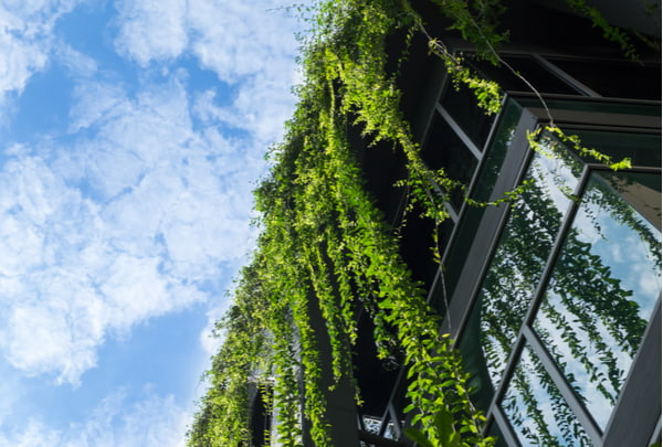 Glass building house covered by green ivy