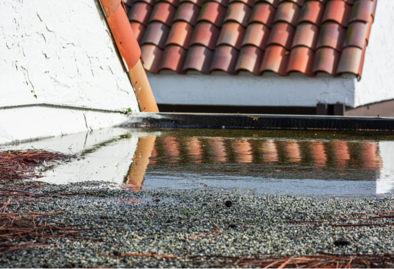 Ponding water on flat roof covered with tree debris