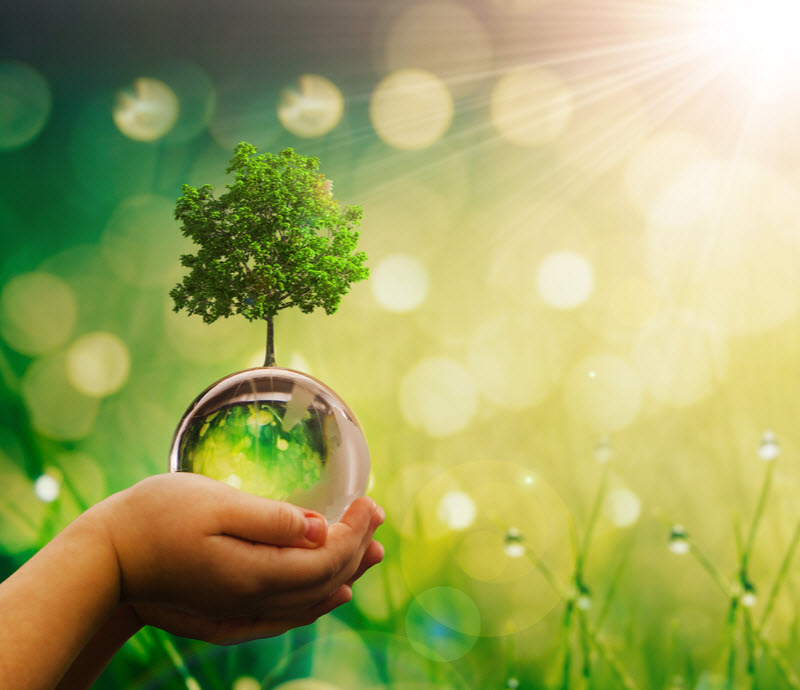 Hand of a child holding a glassball with a tree and surrounded by grass