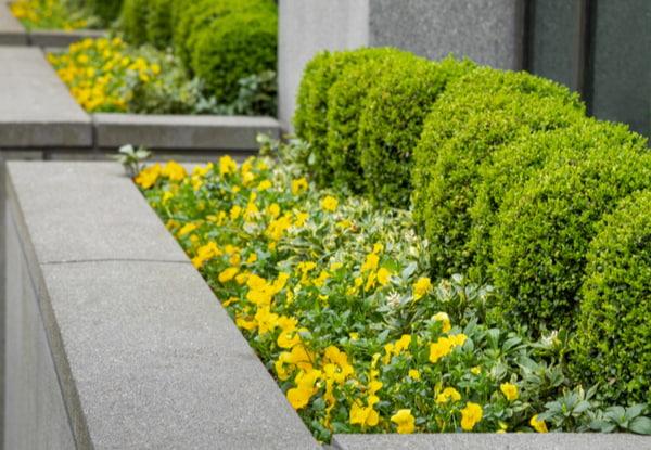 Outdoor plantbox